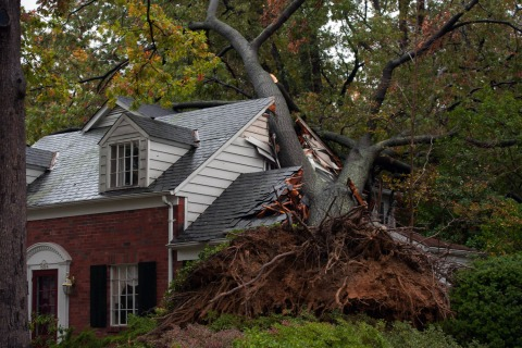 Image: A giant tree rests on the home in the Beverly Hills neighborhood of Alexandria, Va., on Tuesday, October 30th, 2012