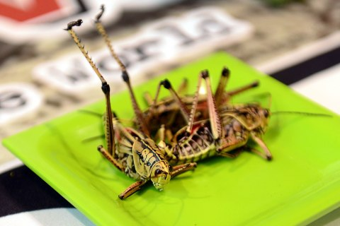 grasshopper_ciw_1018
